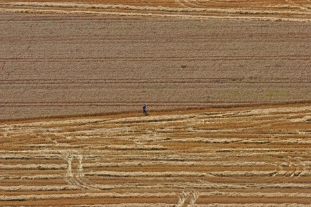 Aerial View: man in wheat field Stock Photo - 8612002