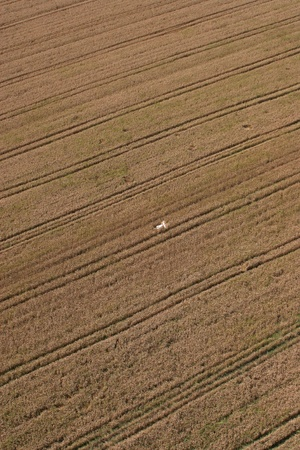 Aerial View: man in wheat field Stock Photo - 8612001