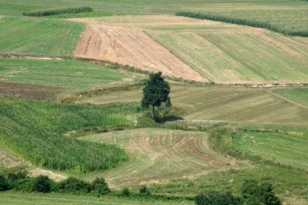 homesteads: Green field and tree from above Stock Photo