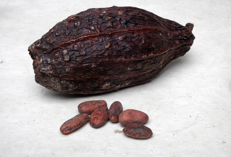 Cocoa pods and beans photo