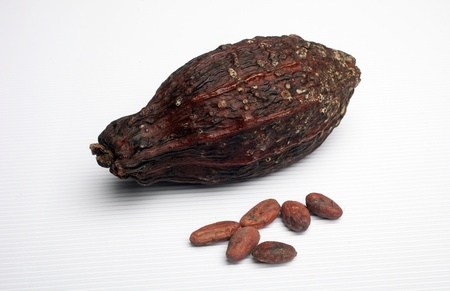 cocoa fruit: Cocoa pods and beans Stock Photo