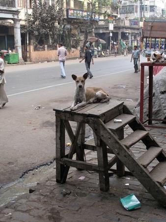 KOLKATA, INDIA -JANUARY 25: Streets of Kolkata. Stray dogs is sitting in the street , January 25, 2009.