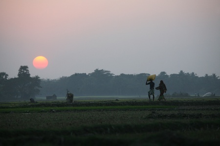Villagers return home after a hard day on the rice fields, Sunerbands, West Bengal, India photo