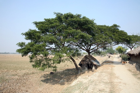 agriculture india: Bengali village Stock Photo