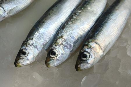 sardinas: Sardinas frescas de agua salada