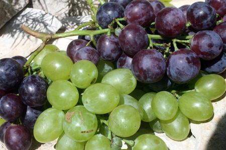 Bunch of grapes  photo