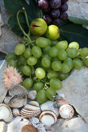 Mediterranean  grapes, figs and shells photo