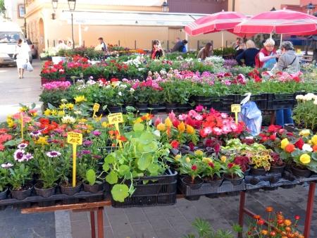 zagreb: Zagreb flower market