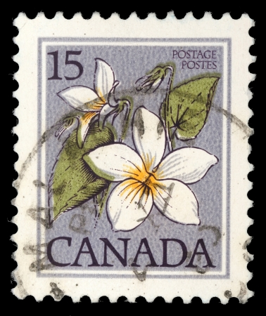 canada stamp: CANADA - CIRCA 1977: A stamp printed in Canada shows Flower: Canada violet, from the series Flowers , circa 1977 Editorial