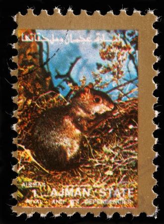 ajman: AJMAN - CIRCA 1973  stamp printed by Ajman shows squirrel, circa 1973 Editorial