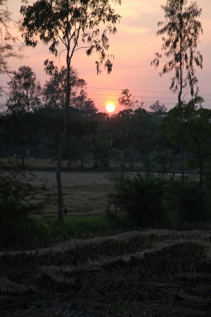 Twilight of the rice fields, Sundarbans, West Bengal, India photo