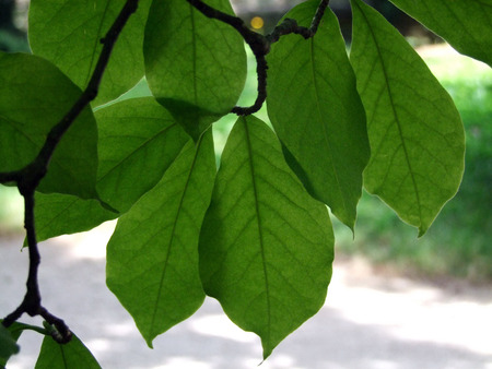 natureal: Leaves