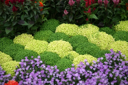 Flowers in garden photo