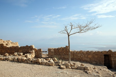 Masada fortress photo