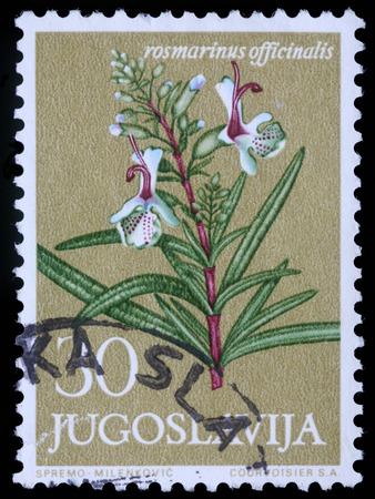 A stamp printed in Yugoslavia shows Rosemary, series, circa 1958 photo