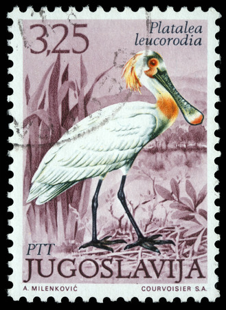 eurasian: Stamp printed in Yugoslavia shows the Eurasian Spoonbill with the inscription  Platalea leucorodia  from the series  Fauna , circa 1980