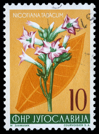 Stamp printed in Yugoslavia shows cultivated tobacco, series, circa 1959