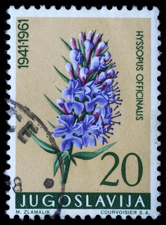hyssop: Stamp printed in Yugoslavia shows hyssop, series, circa 1961