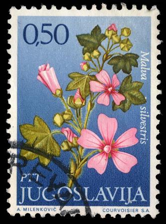 yugoslavia: Stamp printed in Yugoslavia shows genus Malva, series, circa 1970