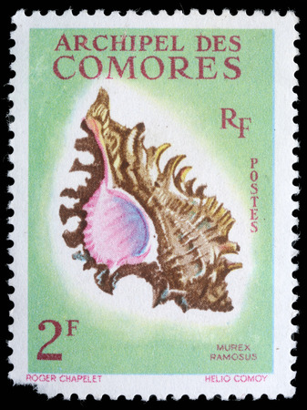 postmail: Stamp printed by COMOROS shows a Murex Ramosus, series, circa 1960 Stock Photo