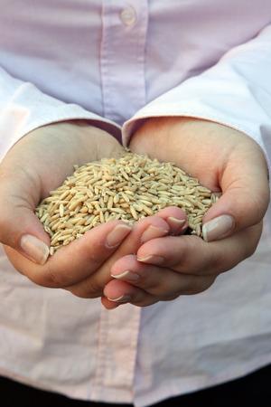 Wheat in woman hand photo