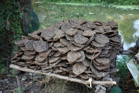 storing: Dry cow dung, India