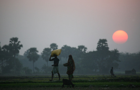 Villagers return home after a hard day on the rice fields, Sunerbands, West Bengal, India