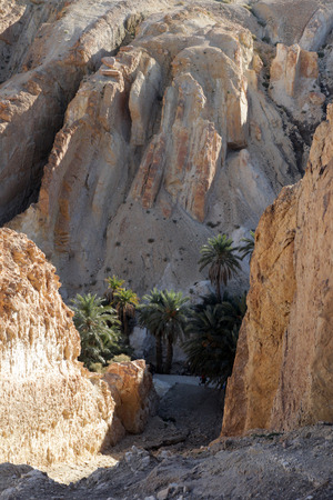 mountain oasis: Mountain oasis Chebika at border of Sahara, Tunisia