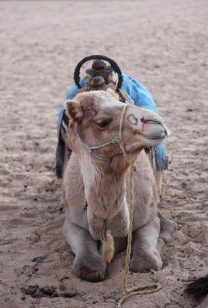 Morning in Sahara desert photo