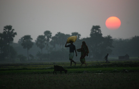 Villagers return home after a hard day on the rice fields, Sundarbans, West Bengal, India photo