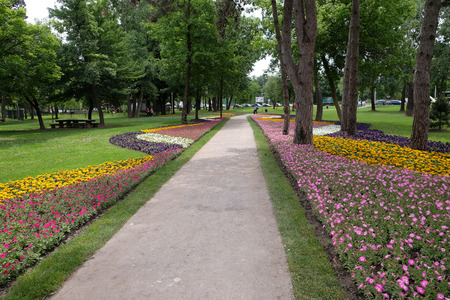 collate: Flowers in park