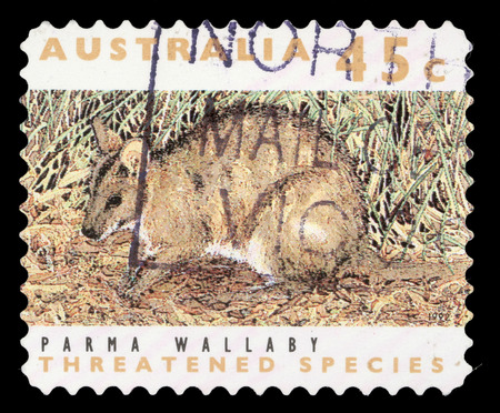 marsupial: a stamp printed in the Australia shows Parma Wallaby, Macropus Parma, Marsupial Animal Stock Photo