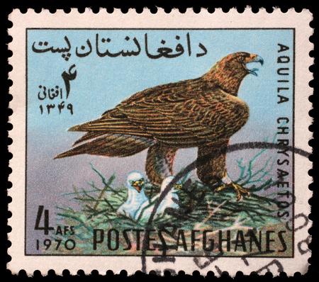 poststempel: Briefmarke in der Afghanistan gedruckt zeigt Golden Eagle Aquila chrysaetos, circa 1970
