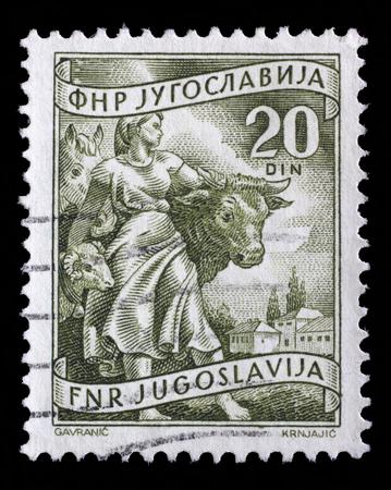 Stamp printed in Yugoslavia shows Livestock raising, inscriptions from series Domestic economy, circa 1952