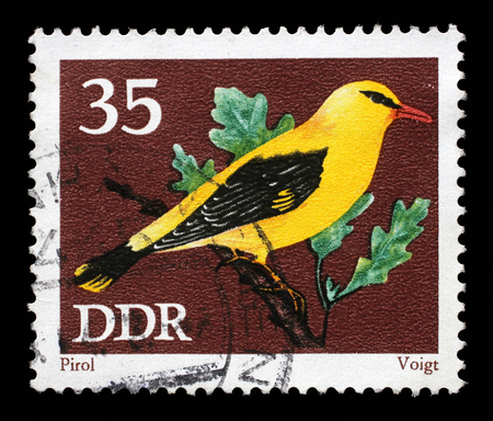 oriole: Stamp printed in GDR shows bird Eurasian golden oriole Oriolus oriolus from the series Protected Songbirds, circa 1973. Stock Photo