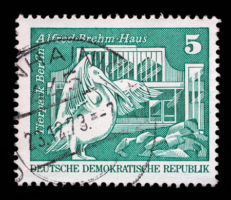stempeln: Stamp printed in Germany shows Eastern white pelican and Alfred Brehm House, Tierpark, Berlin, circa 1973.