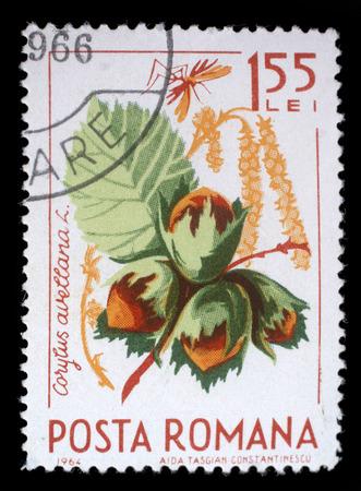 corylus: Stamp printed in the Romania shows Hazelnuts, Corylus Avelana, Common Hazel, Natural Fruit, circa 1964