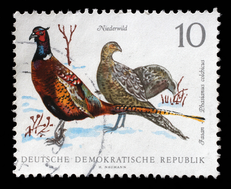 gdr: Stamp printed in GDR shows Pheasant, Phasiaus colchicus, Bird issue, circa 1968