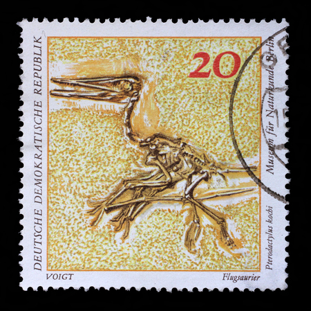 kochi: Stamp printed in GDR shows Pterodactylus kochi, Natural History Museum Pieces, circa 1973.