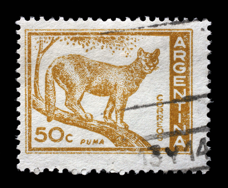 cougar: Stamp printed in the Argentina shows Puma, Cougar, Puma Concolor, circa 1960 Editorial
