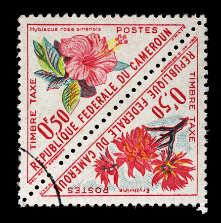 erythrina: Stamp printed in Cameroon shows flowers with the inscription Hibiscus rosa sinensis and Erythrina, from the series Flowers, circa 1963