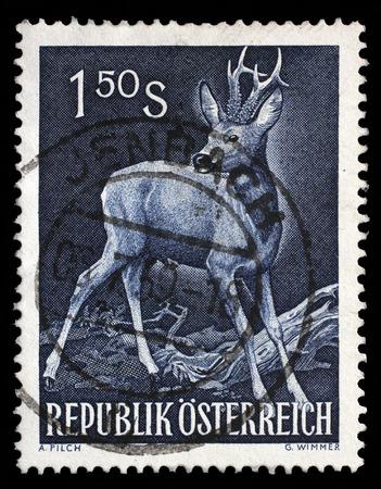 capreolus: Stamp printed in the Austria shows Roe Buck, Roe Deer, Capreolus Capreolus, Wild Animal, circa 1959