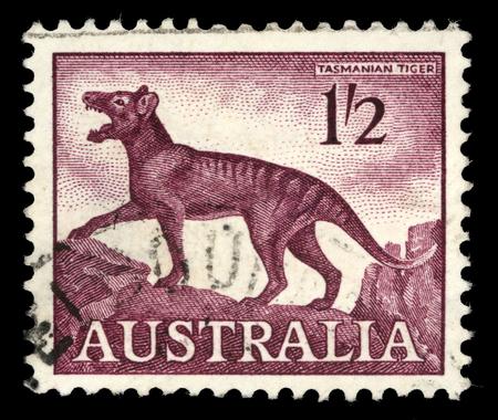 Stamp printed in Australia, shows a Tasmanian tiger Thylacinus cynocephalus, circa 1961 Editorial