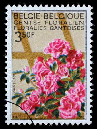 azaleas: Stamp printed in Belgium from the Ghent Flower Show issue shows Azaleas, circa 1970.