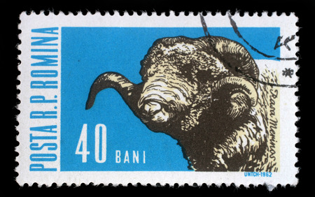 rasa: Stamp printed in Romania shows sheep with the inscription Rasa Merinos from the series Domestic animal, circa 1962