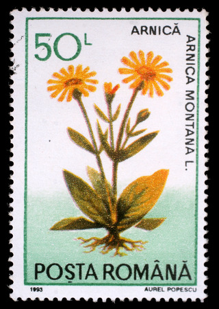 arnica: Stamp printed in Romania shows Arnica montana, herbs series, circa 1993. Editorial