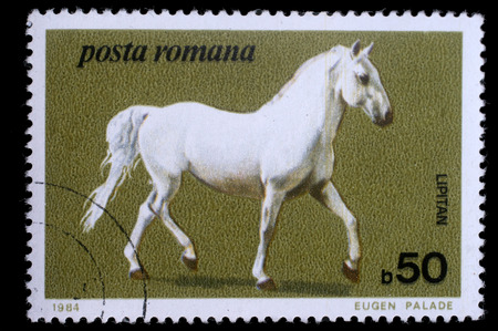 show horse: Stamp printed by Romania, show horse, circa 1984. Stock Photo