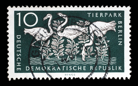 zoological: Stamp printed in GDR shows Greater Flamingo, Berlin, German Zoological Garden, circa 1956