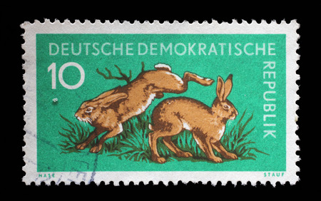 gdr: Stamp printed in GDR shows Hares, Lepus Timidus, Animal, circa 1959 Editorial
