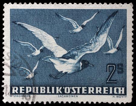 ridibundus: Stamp printed by Austria, shows Black-headed Gull ( Larus ridibundus), circa 1950.